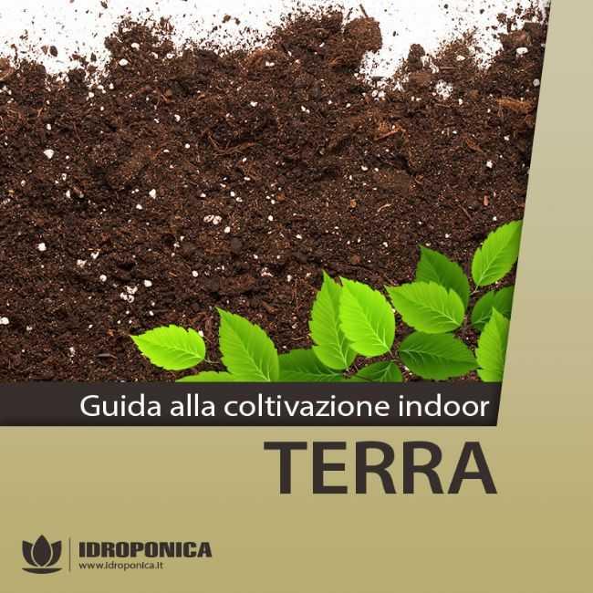 Terriccio tipico della coltivazione tradizionale: Terra.