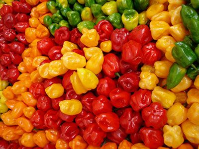 Come coltivare peperoncini piccanti carolina, moruga, habanero