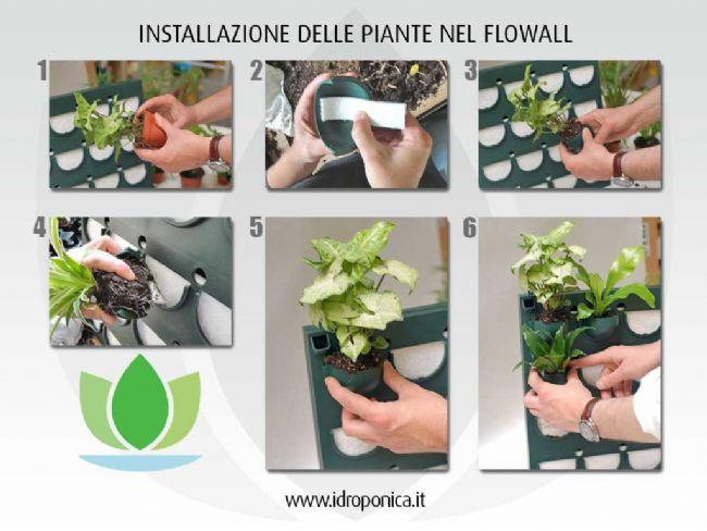 Come installare le piante nel Flowall