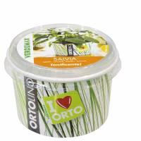 Kit Coltivazione - Ortolino Salvia