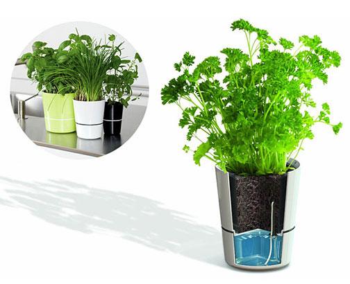 Funzionamento Vaso Hydro Herbs