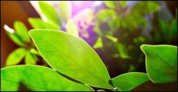 La fotosintesi