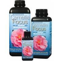 Camelia Focus - Growth Technology