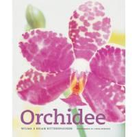 Orchidee di Wilma e Brian Ritterhausen, Mango Editore