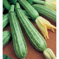 Semi biologici di Zucchino Alberello Sarzana