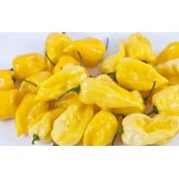 Semi di Peperoncino 7 Pot Orange-Yellow