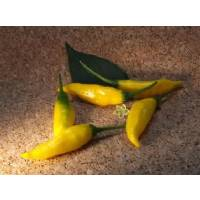 Semi di peperoncino Inca Hot
