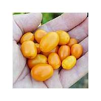 Semi di peperoncino Mini Rocoto PI 387838
