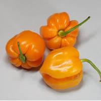 Semi di peperoncino Roatan Pumpkin Habanero