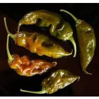Semi di peperoncino Trinidad Scorpion Green