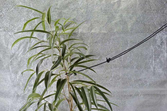 Tirante per piante