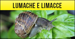 Lumache, limacce