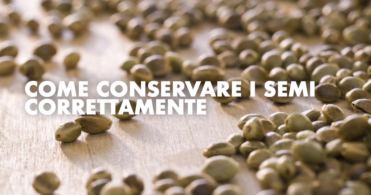 Come Conservare i Semi Correttamente: Guida Pratica di Idroponica.it
