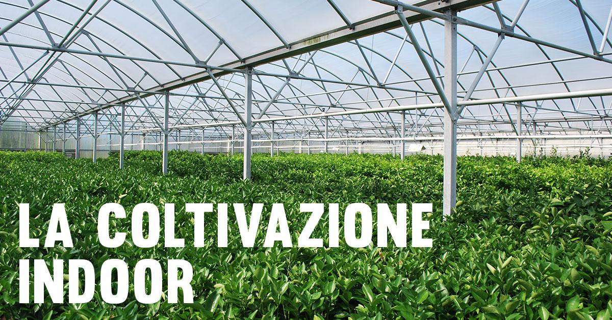 Coltivazione Indoor: ecco cos'è e a cosa serve