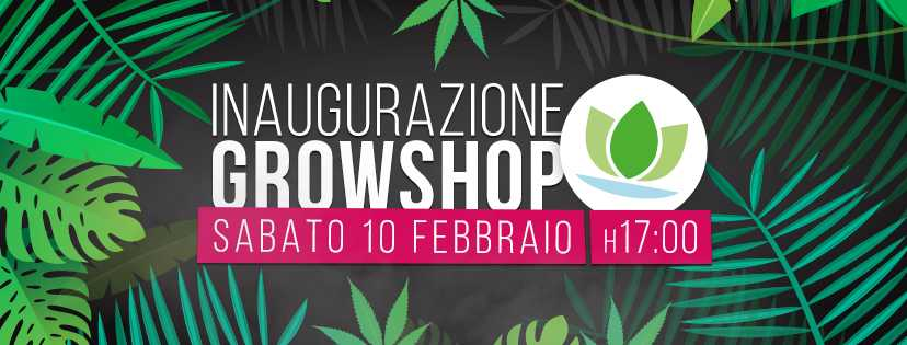 Nuovo Growshop in Via Tuscolana, zona Re di Roma