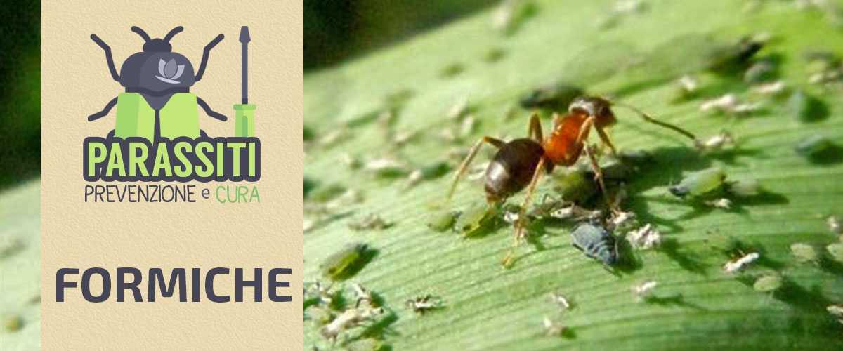 Come Eliminare le Formiche dalle Piante: Rimedi Naturali di Difesa