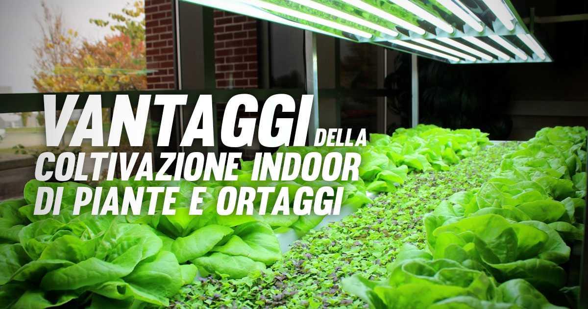 Perché Scegliere la Coltivazione Indoor per Piante e Verdure?
