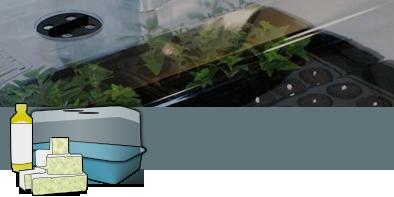 Kit per la germinazione semi e talee