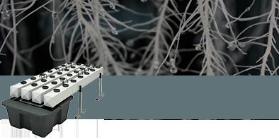 La Coltivazione Aeroponica è il migliore dei Sistemi per Coltivare Indoor