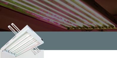 Lampade coltivazione Neon