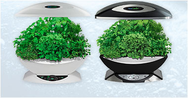 Orto in cucina AeroGarden e Smart Garden