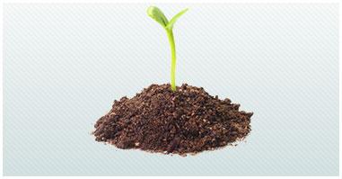 germinazione semi