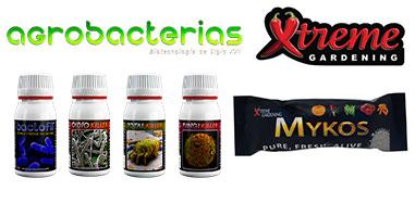 Le Micorrize e i Batteri Benefici Per la Coltivazione