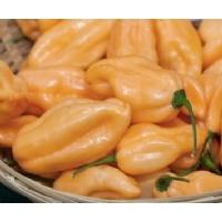 Semi di peperoncino Habanero Peach