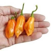 Semi di peperoncino Pickersgills orange