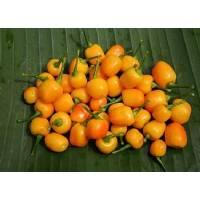 Semi di peperoncino Pimenta do Rio Branco