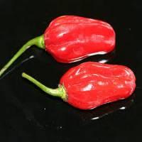 Semi di peperoncino Pimiento Africano
