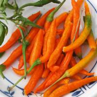 Semi di peperoncino Thai orange hot