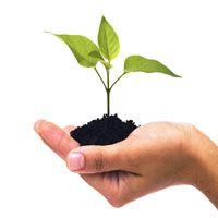 Cura della pianta