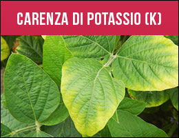 Carenza Potassio, carenze piante