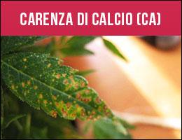 Carenza Calcio, carenze piante