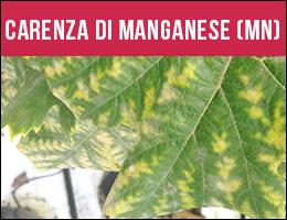 Carenza Manganese, carenze piante