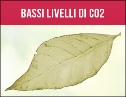 Livelli Bassi di CO2, carenze piante