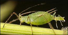 Insetti e parassiti delle piante