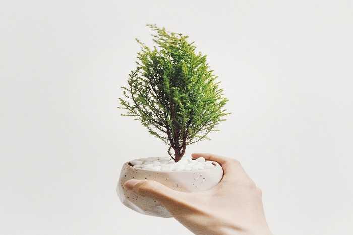 coltivazione e cura piante di bonsai