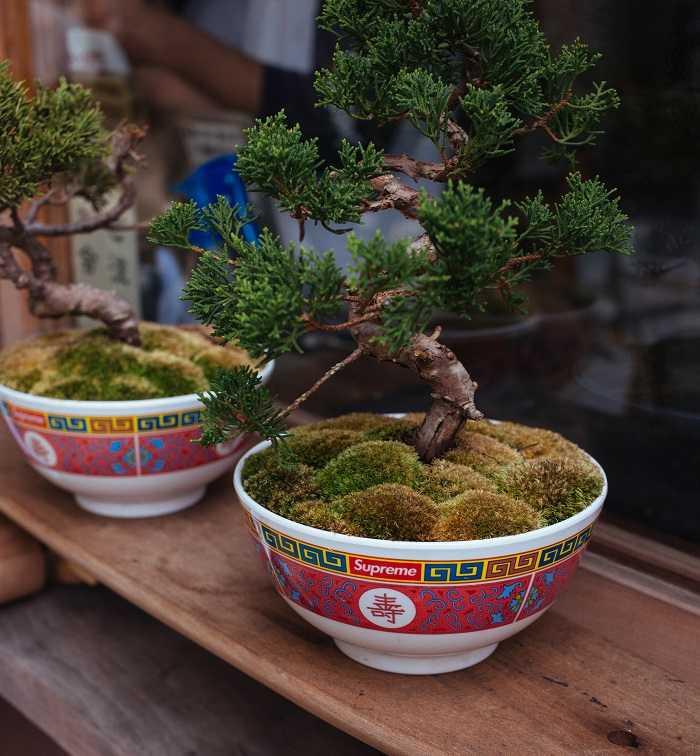 guida coltivazione dei bonsai in casa e all'aperto