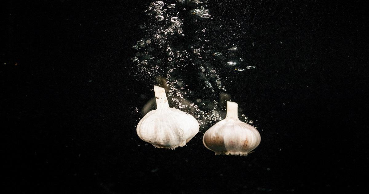 come coltivare l'aglio in idroponica