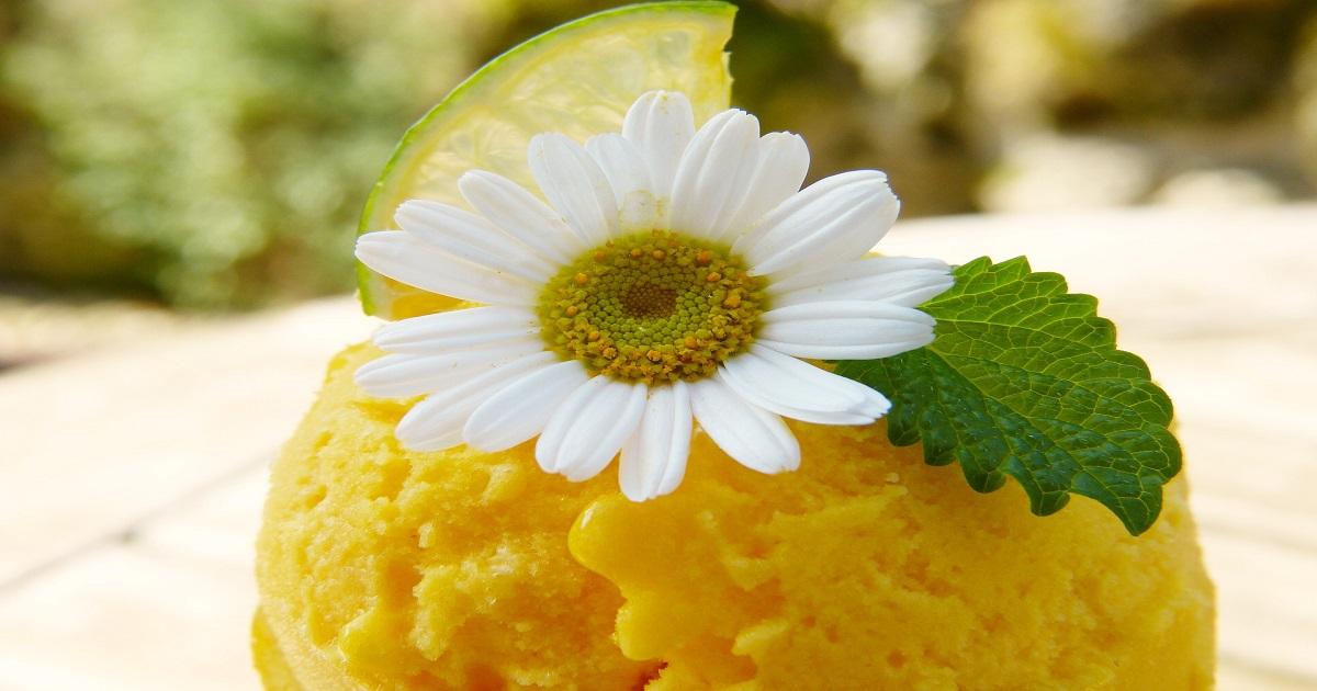 coltivare la stevia dolcificante naturale