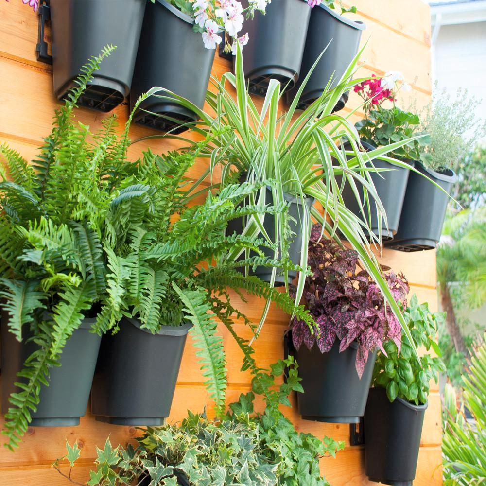 Piante Piccole Da Giardino giardino verticale fai da te: benefici e come realizzarlo