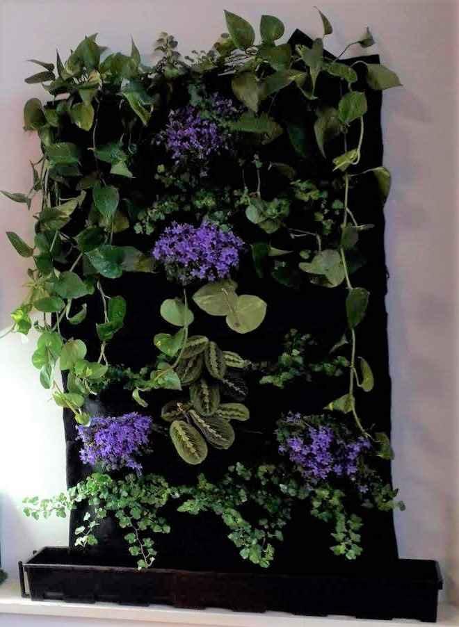 come fare un giardino verticale in casa