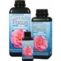 Camelia Focus - Growth Technology