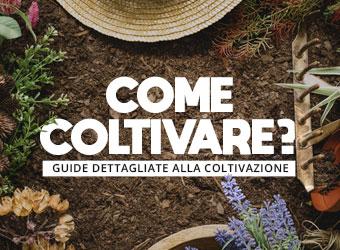 scopri tutte le guide per coltivare indoor