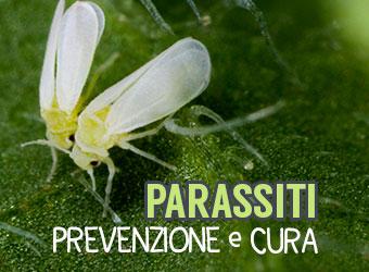 Parassiti: Prevenzione e cura