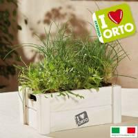 Kit Coltivazione Easyorto di Verdemax - Rucola ed Erba Cipollina