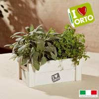 Kit Coltivazione Easyorto di Verdemax - Menta e Salvia