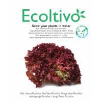 Lattuga Rossa a Foglia Riccia da Taglio - Ecoltivo